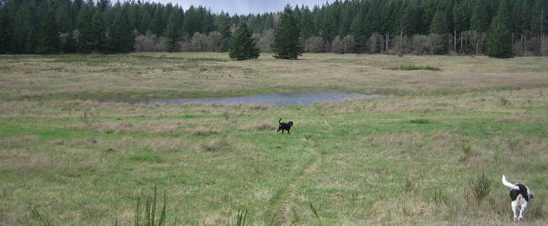 Scatter Creek Wildlife Area near Rochester, Washington